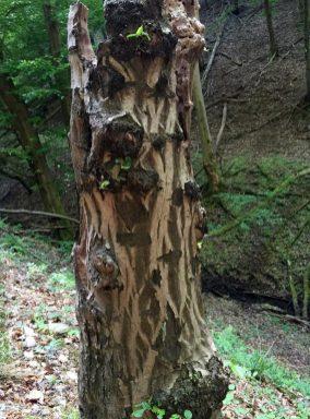 Verrotteter Baum