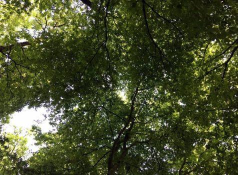 Sonne durchs Blätterdach