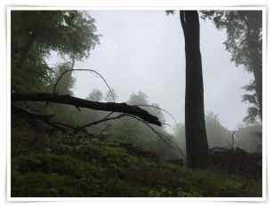 Nebel