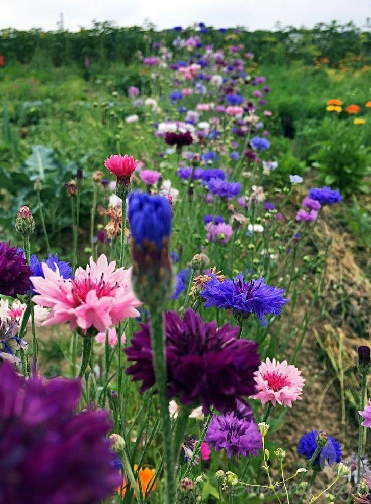 Endlich Sommer in meinem Garten