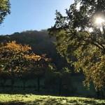 Wanderung am Drachenfels und einfache Linsensuppe