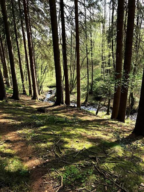 Nadelwald mit Bach