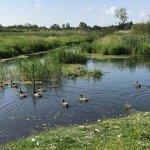 Die Via Baltica – Von Bad Oldesloe nach Nahe