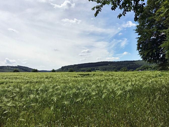 Waldroute und Felsenmeer