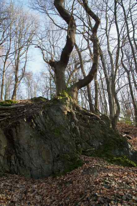 Baum im Fels