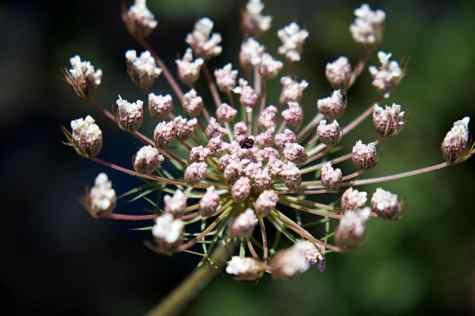 GR 221 Refugi Son Amer (Lluc) - Pollença_34