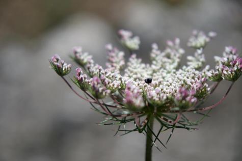 GR 221 Refugi Son Amer (Lluc) - Pollença_35