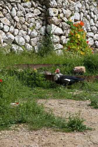GR 221 Sant Elm - Ses Fontanelles1_5