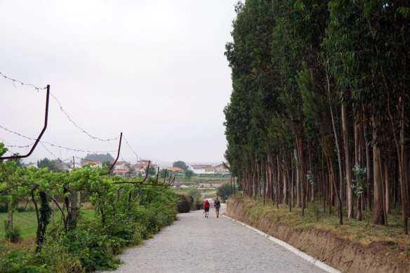 Camino Português DSC01402