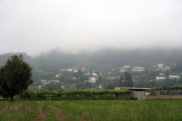 Camino Português DSC01417