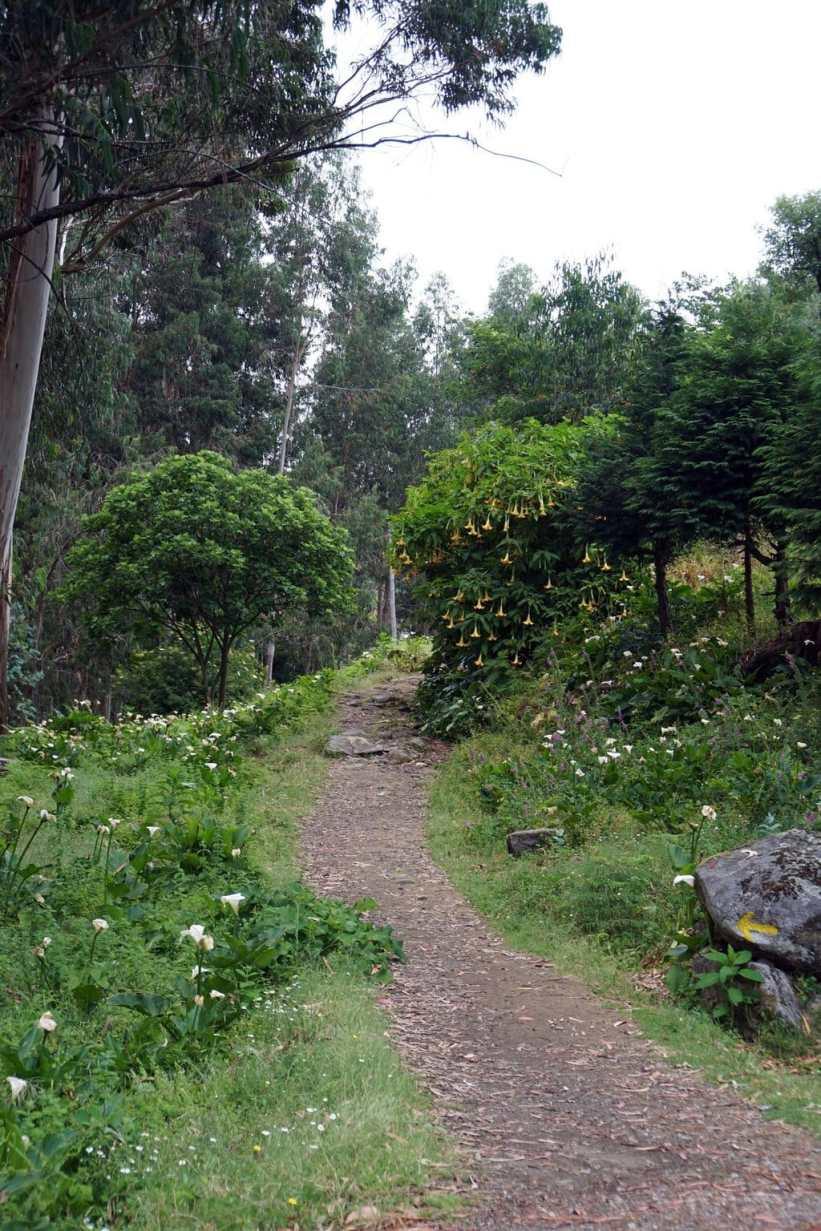 Camino Português DSC01486
