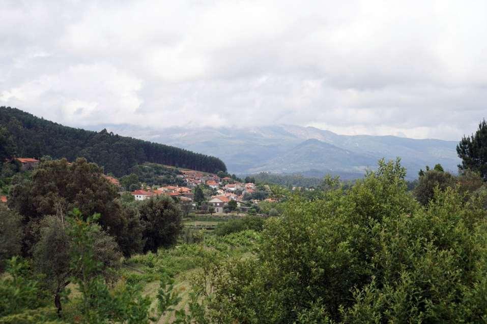 Camino Português DSC01496