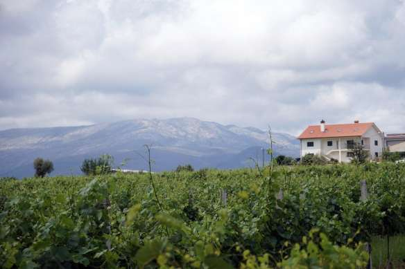 Camino Português DSC01510