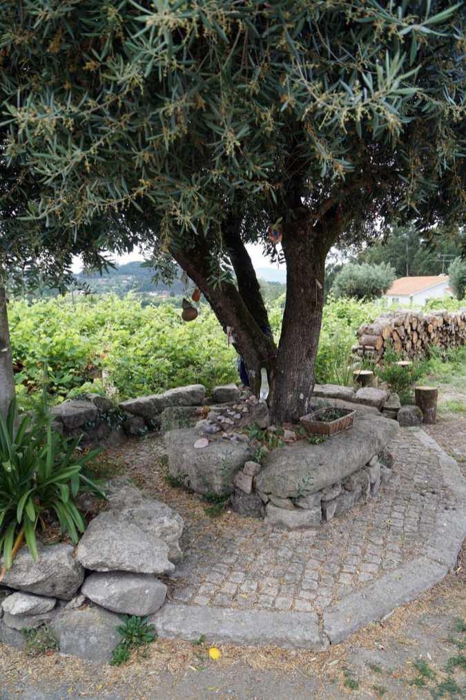 Camino Português DSC01513