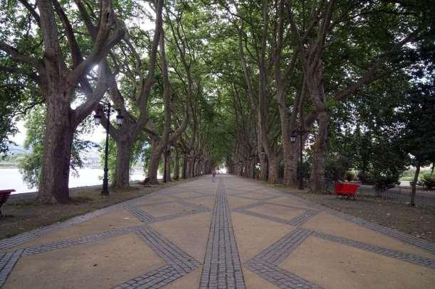 Camino Português DSC01539