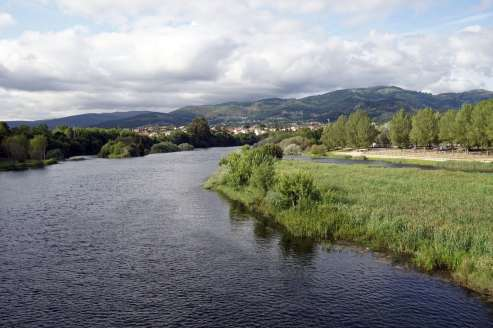 Camino Português DSC01553