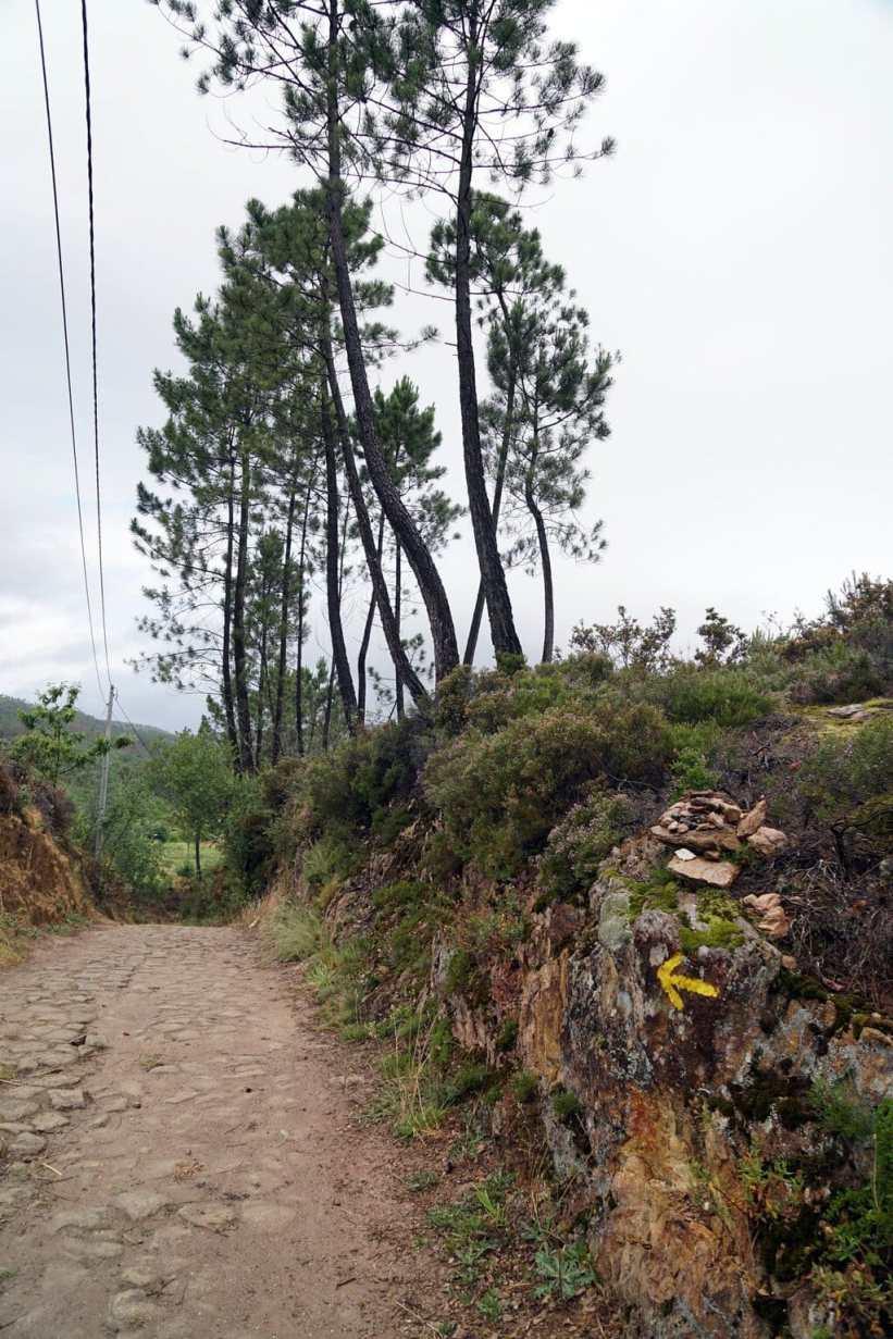 Camino Português DSC01573