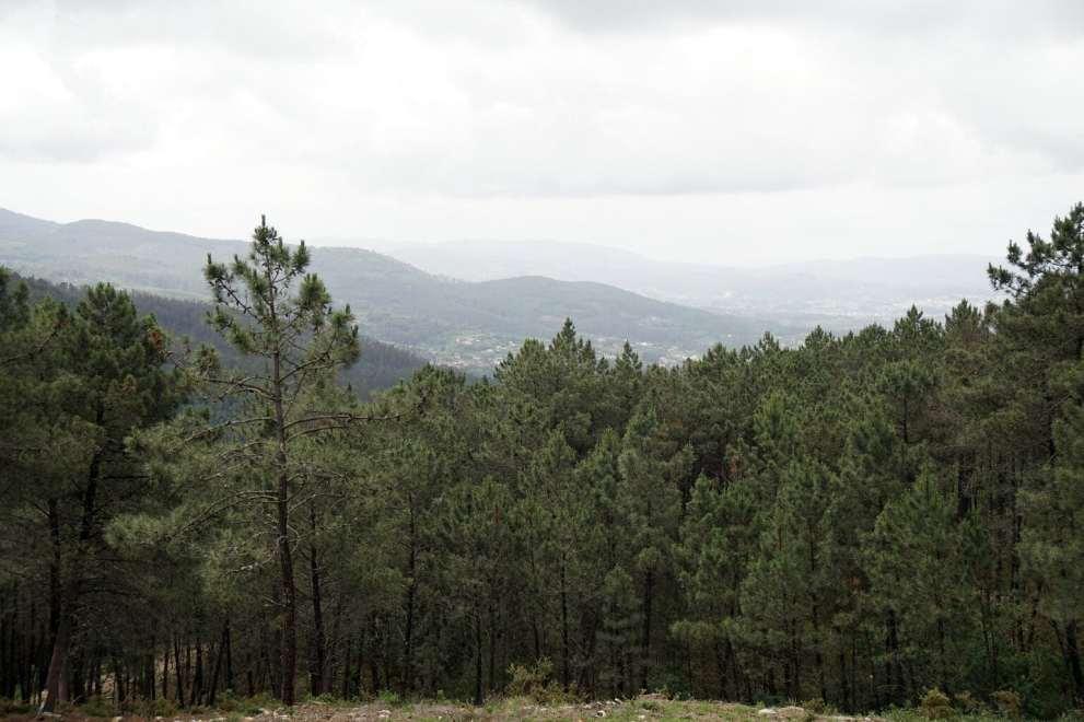 Camino Português DSC01598