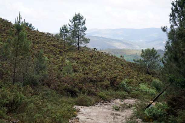 Camino Português DSC01603