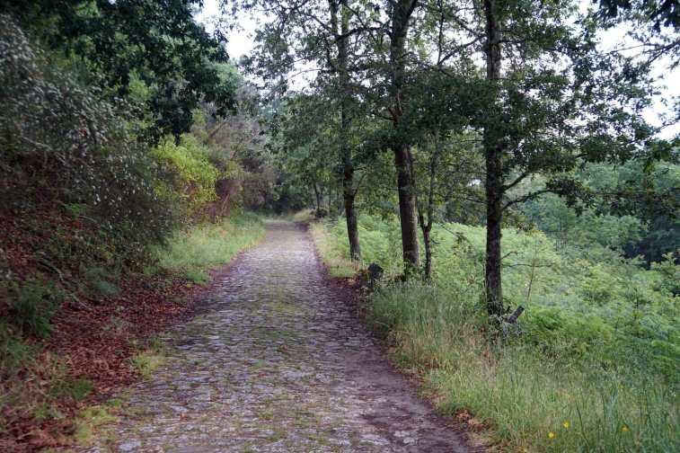 Camino Português DSC01634