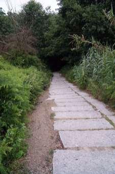Camino Português DSC01857