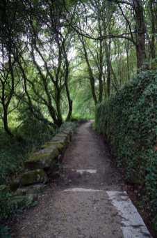 Camino Português DSC01858