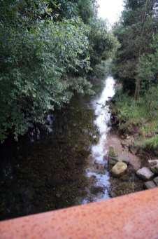 Camino Português DSC01859