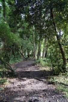 Camino Português DSC01877