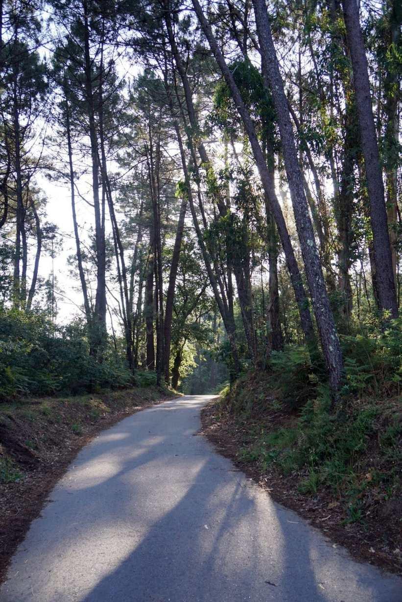 Camino Português DSC01996