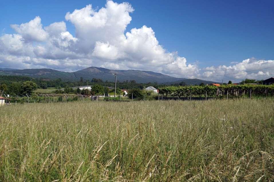 Camino Português DSC02051