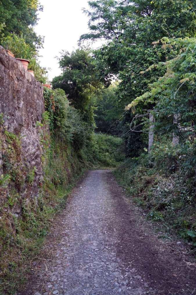 Camino Português DSC02075