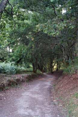 Camino Português DSC02089