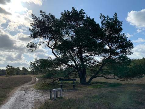 Wandern in der Südheide IMG_4332