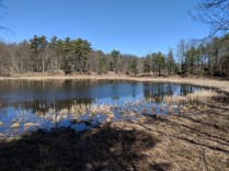 A haven for waterfowl