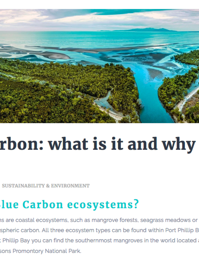 What is Blue Carbon