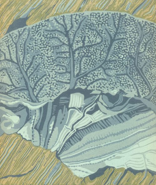 Original Linoleum Relief Art Print for Sale - Sand Dollar
