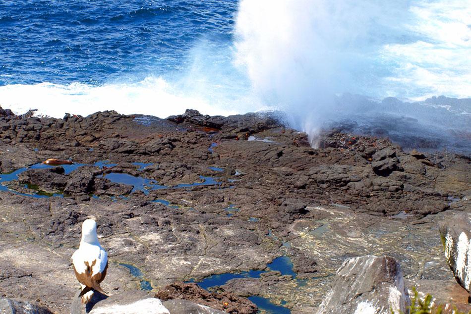 8-Blow-Hole-Española-Island-Sea-Star-Journey