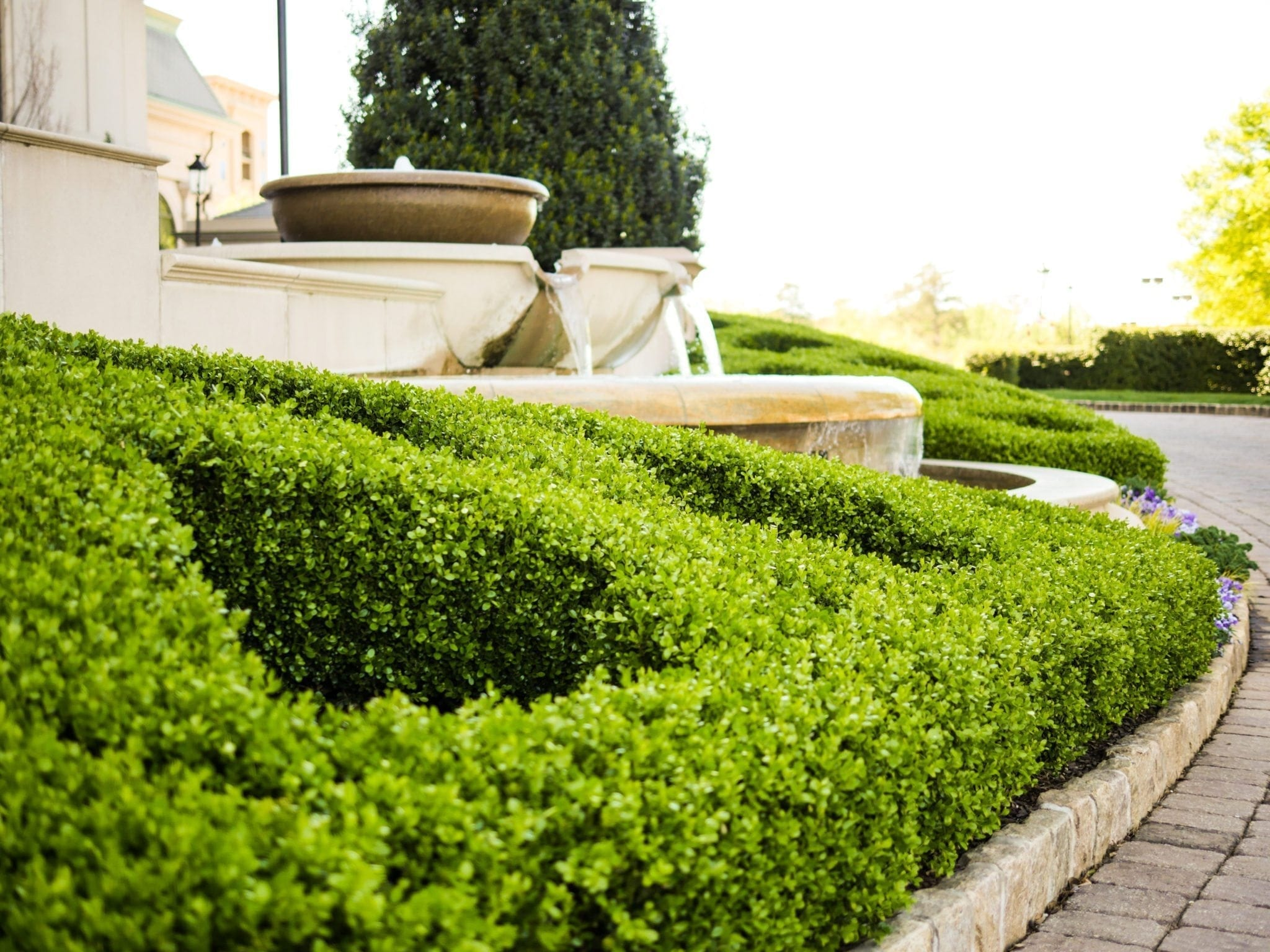 A formal boxwood hedge in Atlanta.