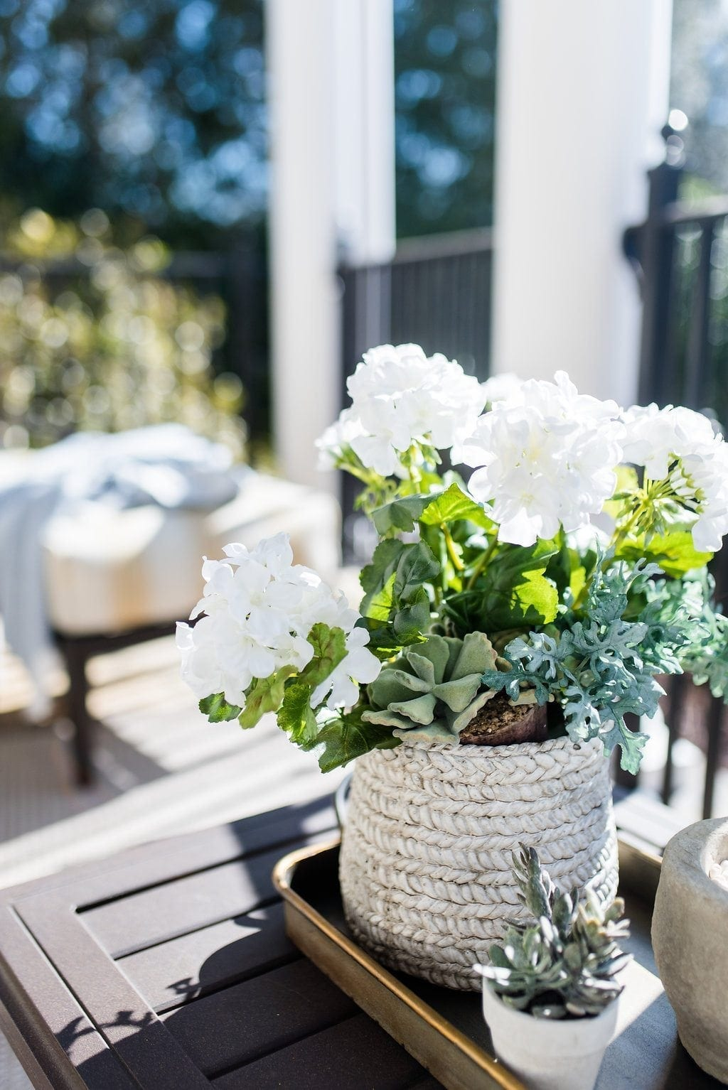 Small flowers in shade. White geraniums and succulents.