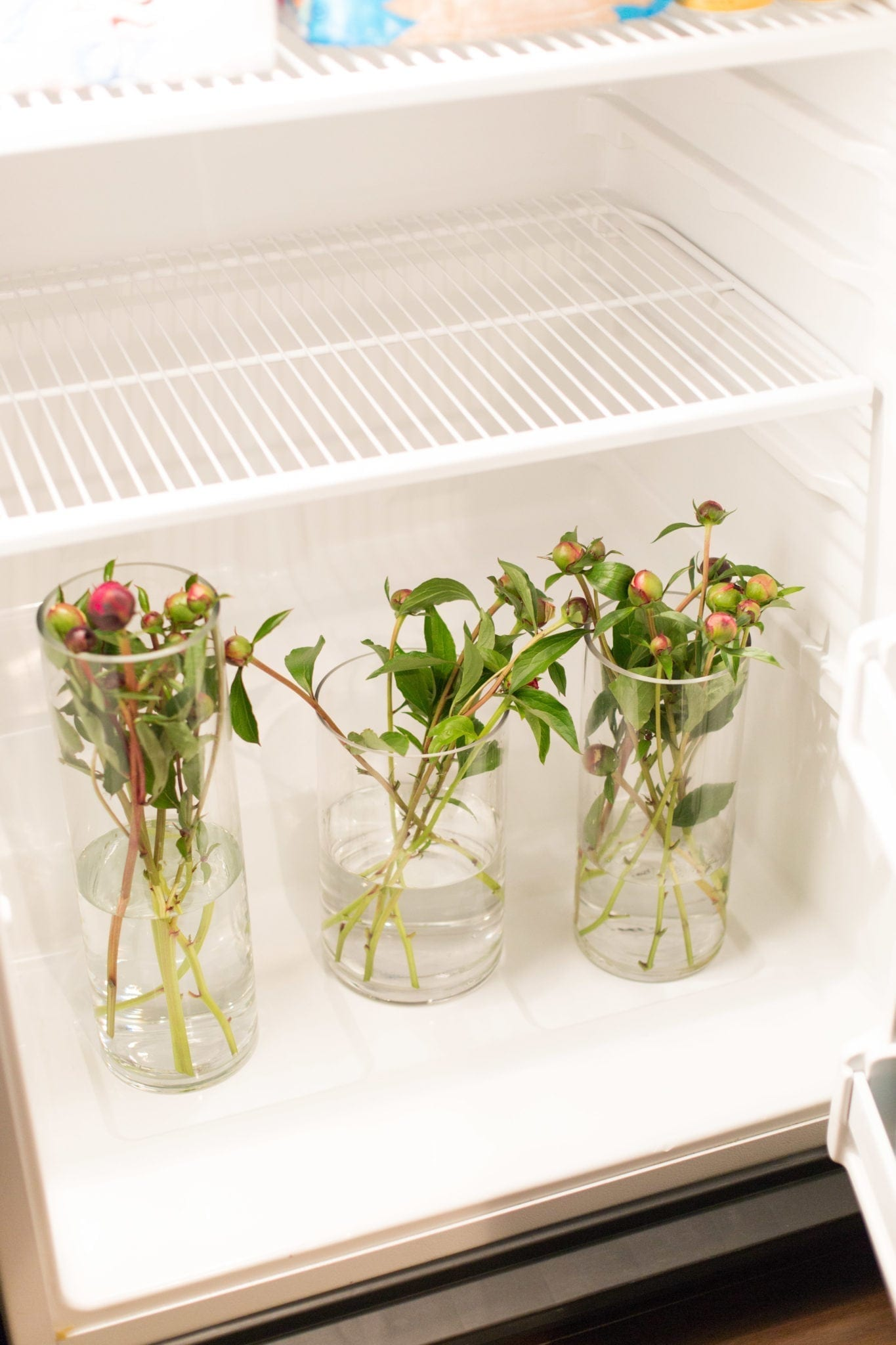 How to store peonies. Keeping peony blooms for flower arrangements.