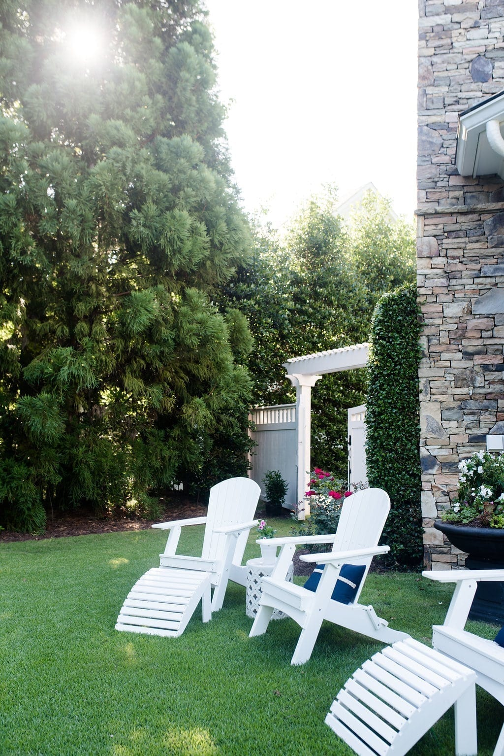 5 best trees for border & privacy