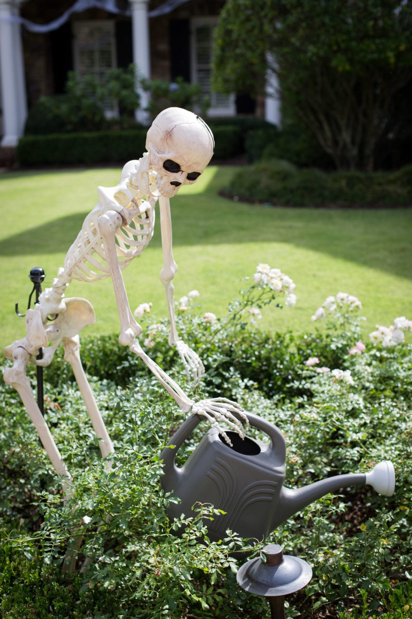 Funny ways to set up skeletons for Halloween