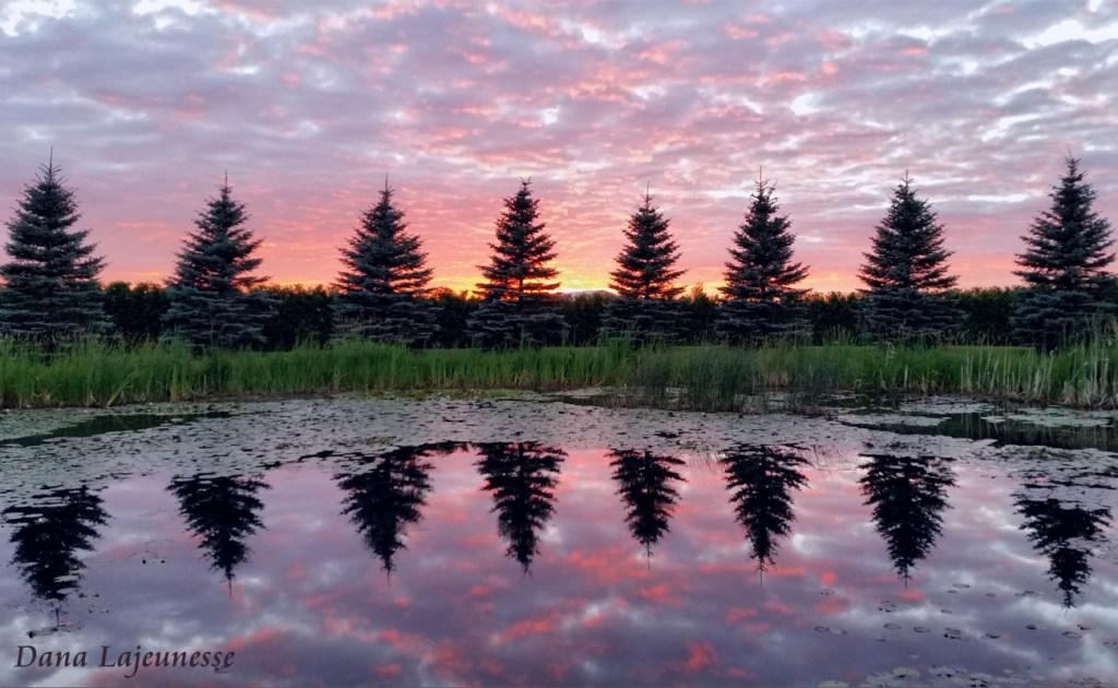 Nature's Mirror by Dana Lajeunesse