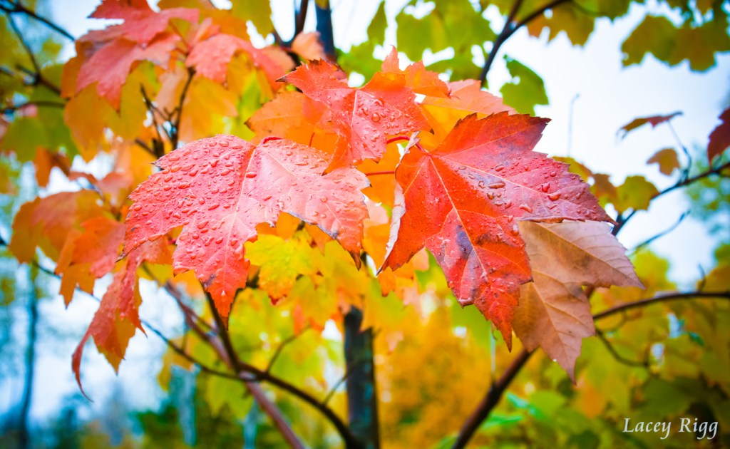 Northern Ontario Fall by Lacey Rigg