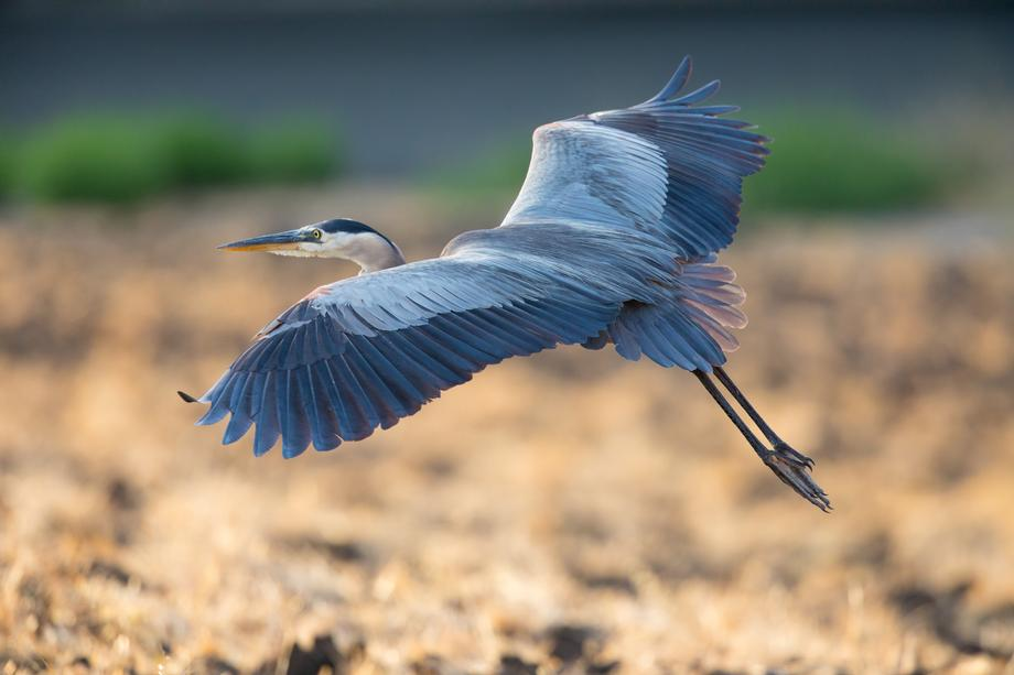 Image result for images heron