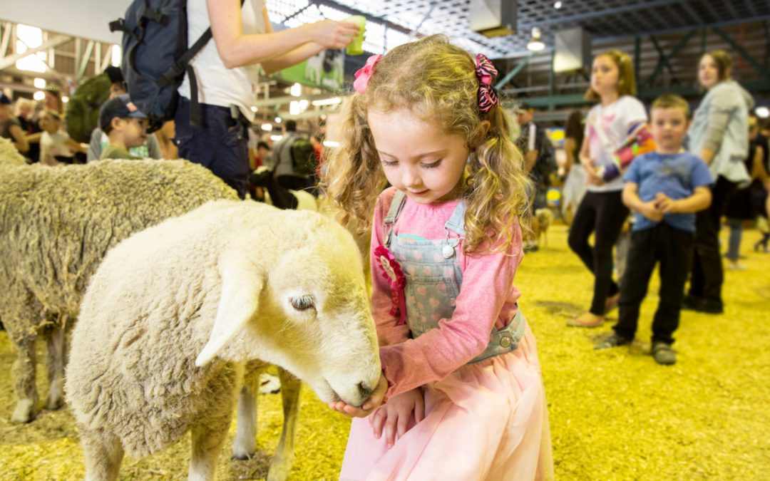 The-Ekka-Show-Queensland