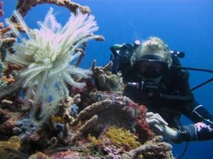 Rebreather diving on Bunaken