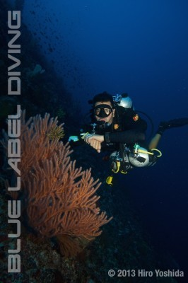 Technical Diving Courses PADI Tec 50