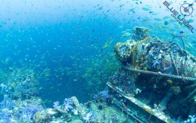 SSI XR Advanced Wreck fish life king cruiser