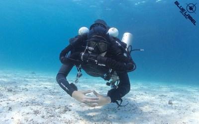 ccr rebreather optionsIMG_9390